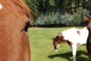 06-aspen-magazine-horse-ranches