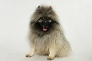 33-aspen-magazine-dogs-of-aspen